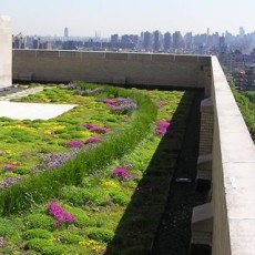 NYC-Bronx_GreenRoof